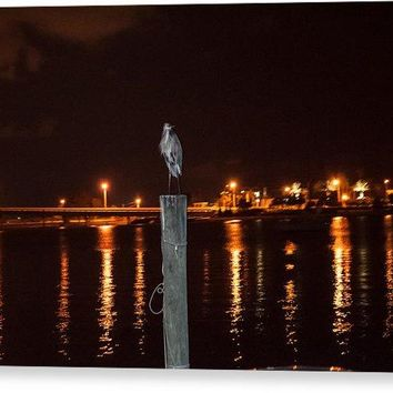 Blue Heron Night - Canvas Print