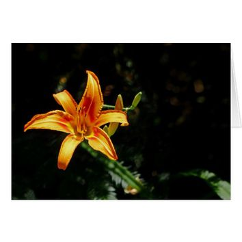 Orange and Yellow Daylily, Blank Inside Card