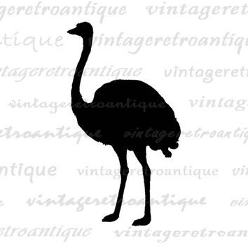 Printable Graphic Ostrich Silhouette Digital Bird Artwork Download Image Vintage Clip Art Jpg Png Eps  HQ 300dpi No.3312