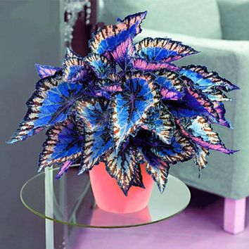 100pcs/Bag Coleus Bonsai Flower Leaf Plants Rainbow Dragon Garden