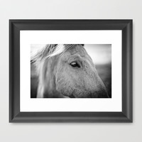 Icelandic Horse Framed Art Print by Daniel Fornies