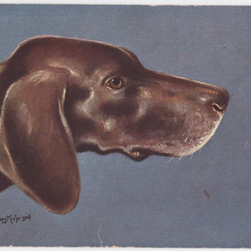 "Antique German Postcard ""German Shorthaired Pointer"" -- 1900?"