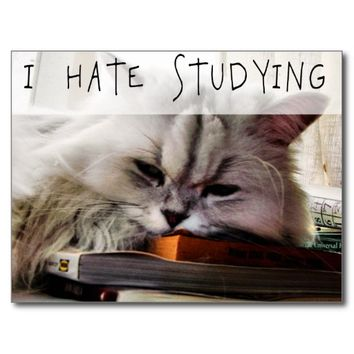 I Hate Studying LOLCAT Funny Kitty Postcard