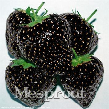 100 Healthy Black Strawberry Seeds ruit Fresh Exotic Seeds Good Taste Fruits Easy Care Bonsai Plants For Home &Garden Pot Garden
