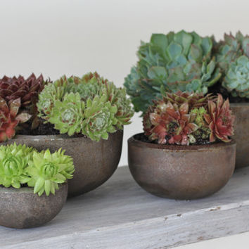 Reclaimed Industrial Urban Steel Bowls - can be used as plant pots/planters or simply as Sculptural pieces