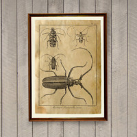Cabin poster Beetles print Antique art Insect decor AK397