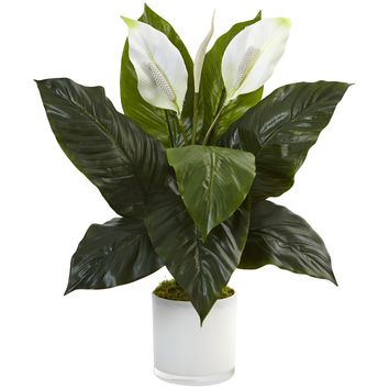Artificial Plant -Spathifyllum with Glossy Glass Planter