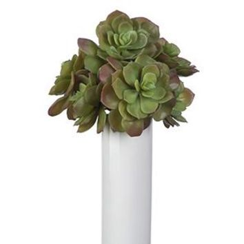 Faux Echeveria Succulent - Set of 3 | Stemmed Floral | Floral, Plants, & Trees | Decor | Z Gallerie