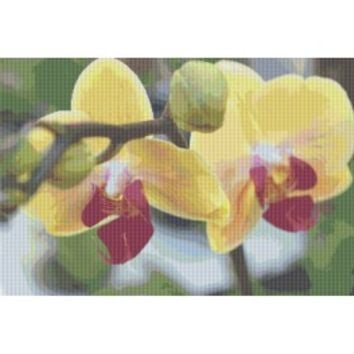 Orchid Counted Cross Stitch Pattern, Xstitch - X-Stitch-Patterns Counted Cross Stitch