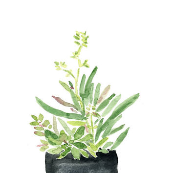 original watercolor painting, Succulents in Black planter, art, zen, calm, Green, home decor, minimalist art, home garden