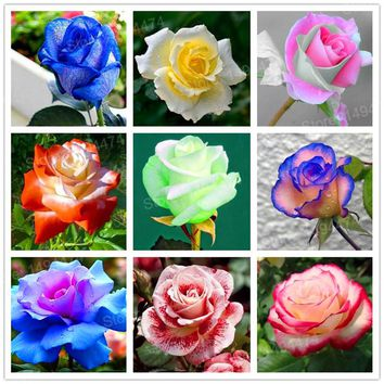 200pcs/bag Rare mixed color flower seeds rainbow rose seeds beautiful flowers bonsai plant seeds for home garden