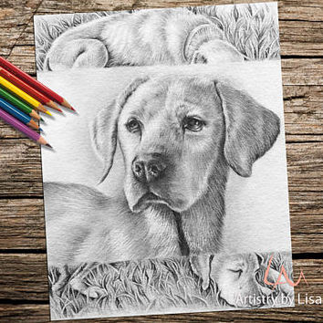 Adult Coloring Page, Instant download coloring, coloring book for adult, Printable coloring page, Retriever, coloring page, coloring book