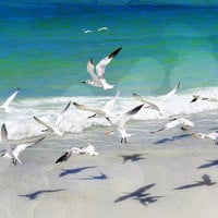 A Flock of Sea Birds, Beach Nature Photography, Wall Art Print, Royal Terns in Flight, Turquoise Ocean Surf Water, 8x10 11x14 16x20 20x30