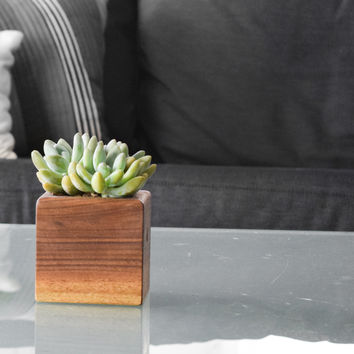 W/S Succulent Box Planter, Walnut Small