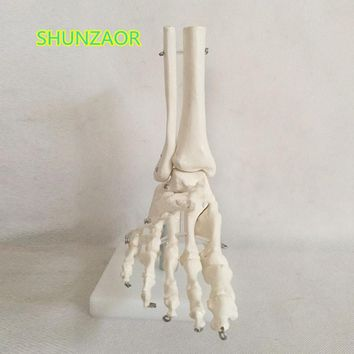 Life size Human Life Size Right Foot Joint Anatomical Model Skeleton Anatomy skeleton for sale Artist CG model