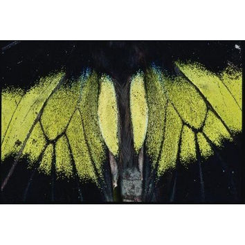 Close view of iridescent moth wings