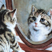"""Fine China Plate, Victorian Cat Capers, Porcelain Decorative, Bradex Collectible, """"Who's The Fairest of Them All?"""" by Frank Paton"""