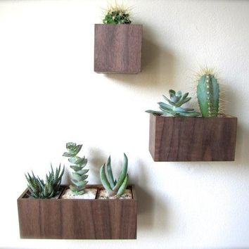 "Set Of Three Wall Planters Hanging Planters In Walnut Wood Includes 3""x3""x3"" 5""x3""x3"" And 8""x3""x3"" Sizes Air Plants Sold Separately"