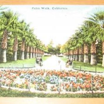 Vintage Palm Walk California Postcard