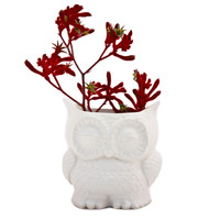 claylicious: Owl Planter Large White, at 29% off!