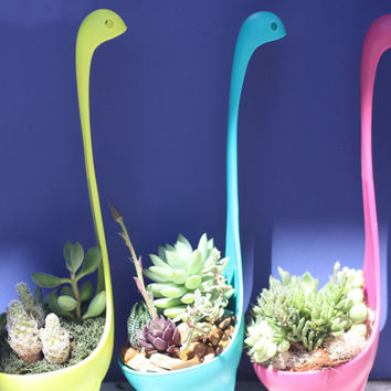 Long Neck - Brisk Collection of Succulents in Your Choice of Pink, Blue or Green in Re-purposed Plastic Dinosaur