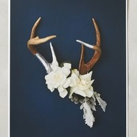 Antler Collage Print by Anthropologie
