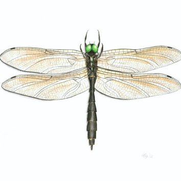 "Dragonfly Art Print - Archival Fine Art Reproduction of Original Hine's Emerald Dragonfly Illustration, Insect Art Giclee Print 8.5"" X 11"""