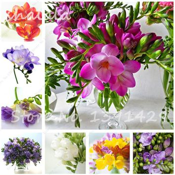New Seeds! 150PCS Color Mixing Freesia Hybrida Seeds Indoor Potted Flowers Orchids, Floral Quiet Home Garden Plant