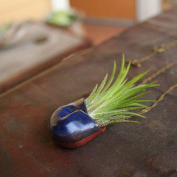 Living air plant necklace - navajo clay and Tillandsia on chain - Vienta