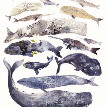 Whale Collection -  Archival Print