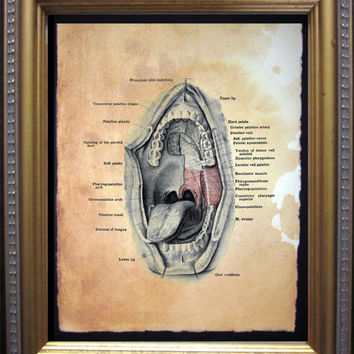 Mouth Anatomy Diagram Art Print - Vintage Anatomy Art Print- Vintage Art Print on Tea Stained Paper