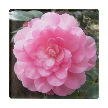 Pink Waterlily Camellia Floral Glass Coaster