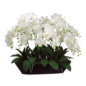 White Phalaenopsis Orchid in Oval Container