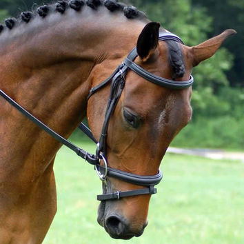 Red Barn Centerline Weymouth Bridle with Crank Noseband
