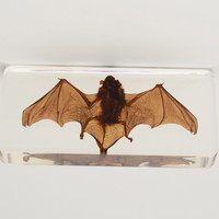 Taxidermy - Bat in Lucite - Rectangular
