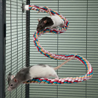 Zig-Zag Rope Perch for Small Pets: Toys for Rats, Mice and Small Pets