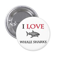 I Love Whale Sharks Pinback Button