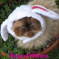 "The Sheepish One sheep costume hat for dogs and cats (x-small (6-10"" collar))"