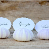 10 Purple Sea Urchin Shell Wedding Place Card Name Holders - Beach Reception Table Chic Decor - Guest Escort Card Favor Ocean Nautical