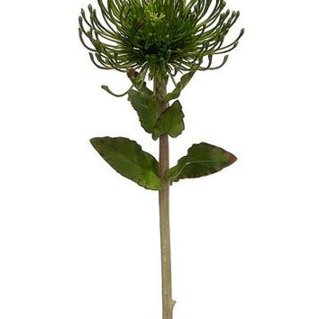 "Artificial Protea Flower in Dark Green - 26"" Tall"