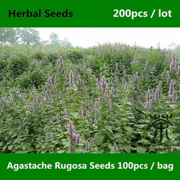 ^^Wrinkled Giant Hyssop Agastache Rugosa Seeds 200pcs, Patchouli Herb Blue Licorice Seeds, Indian Mint Purple Giant Hyssop Seeds