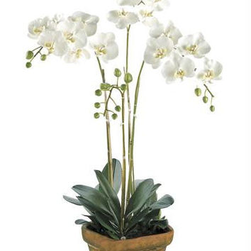 Artificial Flower Arrangement - Phalaenopsis Orchid