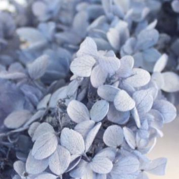 Pyramid Azisai Preserved Hydrangea in Royal Blue2-4 per Box
