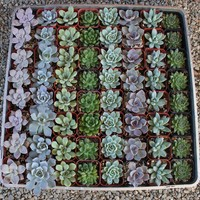 Wedding Favor Succulents