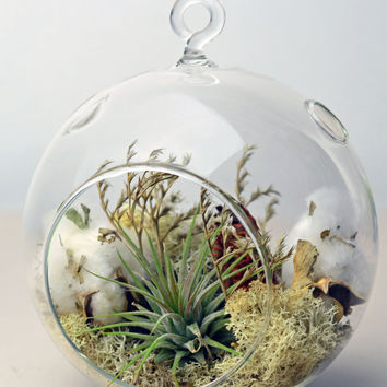 Air Plant Terrarium - Hanging Glass Orb Terrarium - Tillandsia Ionantha - Natural Moss - Dried Flowers - Cotton Branches