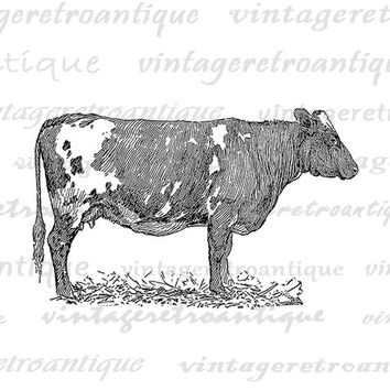 Printable Cow Digital Image Antique Cow Graphic Farm Animal Art Download Illustration Digital Vintage Clip Art Jpg Png Eps HQ 300dpi No.3452