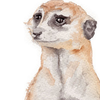 Meerkat Watercolor Painting 8 x 10 Giclee Fine Art Print