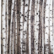 Kikkerland Rustic Beyond the Grove Shower Curtain in Birch