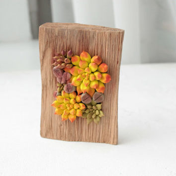 Yellow Orange Green Succulent Decor Decoration Wood Frame Base Basis Planted Flowers Home Decor Accessory Housewarming Birthday Gift