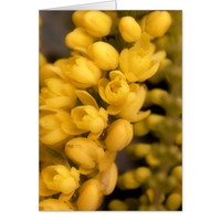 Tiny Yellow Blossoms Card